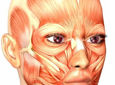 face_muscles